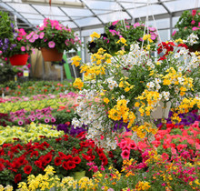 Greenhouse With Beautiful Flowers And Plants