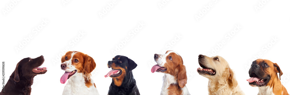 Fototapety, obrazy: Pensive different dogs looking up