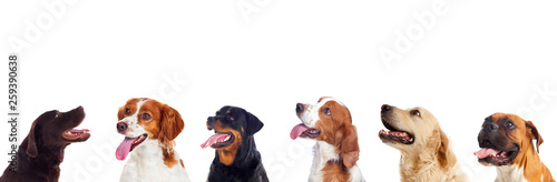 Pensive different dogs looking up Canvas Print