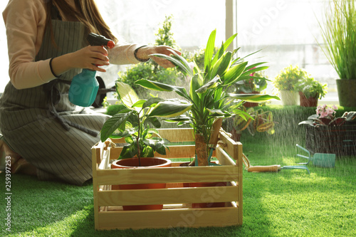 Woman taking care of plants indoors, closeup. Home gardening Wallpaper Mural