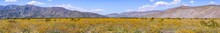 Panoramic View Of Fields Of De...