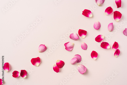 top close up view of red rose petal on pink