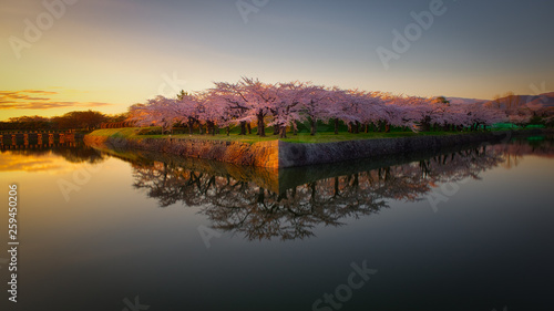 Aluminium Prints Dark grey Evening of Sakura Goryokaku Park