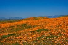 Wildflowers Super Bloom