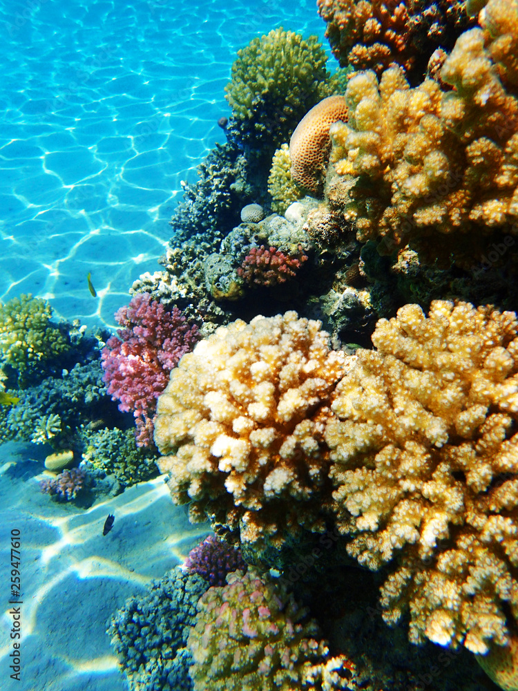 Fototapeta coral reef in egypt