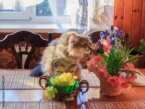 Fototapety, obrazy: Adorable gray kitty with basket flowers on the table