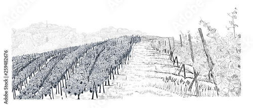 Poster Blanc Hill of vineyard landscape with city on horizont hand drawn sketch vector illustration isolated on white
