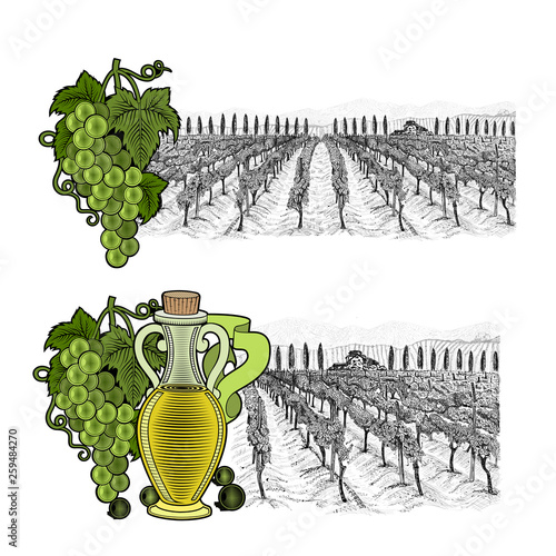 Two drawned sketches landscape of vineyard with house and mountains on horizont, with color elements. White grapes and grapes with bottle of oil or wine from left side. Vector illustration