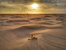 A Tiny Leaf Grown On The Sandy Beach With Sunset View Background.