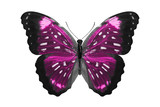 Fototapeta Motyle - tropical pink butterfly. isolated on white