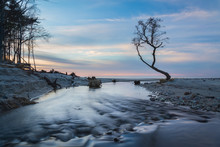 Small Stream Flows Into The Sea Through The Beach. Lonely Bare Tree