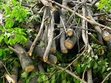 Pile Of Tree Cut