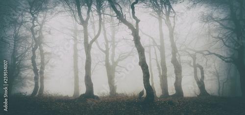 nawiedzony-las-upiornych-drzew-w-gestej-mgle-vintage-fx