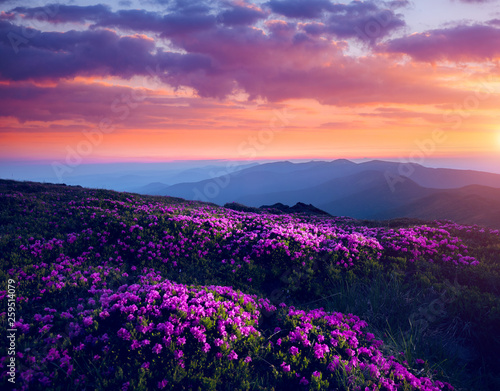 Wall mural - Awesome alpine valley in warm light. Location Carpathian national park, Ukraine, Europe.