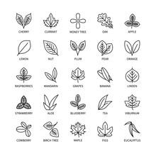Useful Leaves Linear Icons Vegan Analysis Vector Set Of Design Elements Leaf Tree Bush Berry Healthy Food Vector Symbol Set