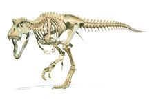 Tyrannosaurus Rex Dinosaur Pho...