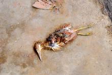 Dead Birds On The Ground