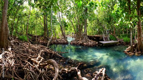 Crédence de cuisine en verre imprimé Rivière de la forêt mangrove forest krabi thailand