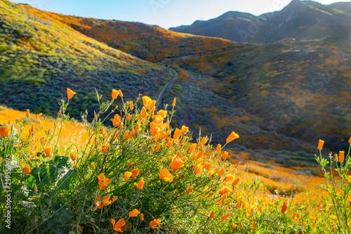 Hiking Trails at Walker Canyon Canvas Print