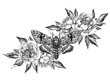 Hand Drawn Acherontia Styx Butterfly And Peonies