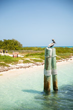 Pelican Perched On Pole At Dry Tortugas Fort Jefferson National Park