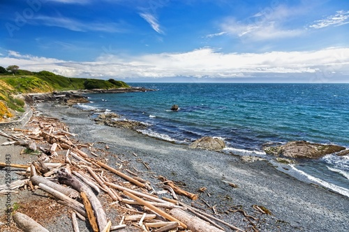Photo  Scattered Driftwood on Pacific Ocean Beach Waterfront near Dallas Road in City o