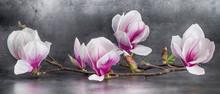 Wunderschöner Magnolienzweig Isoliert Auf Anthrazitem Hintergrund