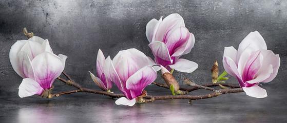 Wunderschöner Magnolienzweig