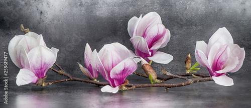 Fotografie, Obraz  Wunderschöner Magnolienzweig