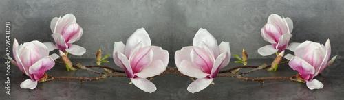 Garden Poster Magnolia Wunderschöne Magnolien