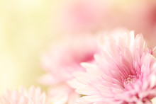 Beautiful Soft Pink Flowers Wi...