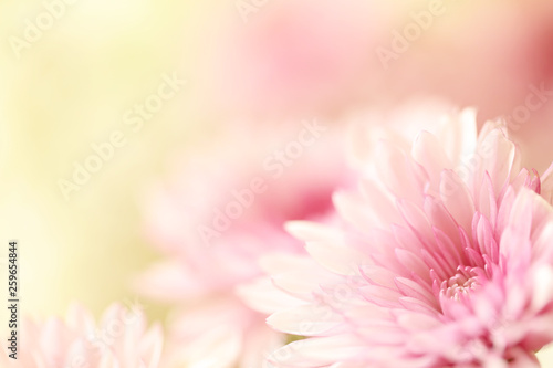 Tuinposter Gerbera Beautiful soft pink flowers with a blurred yellow background with plenty of room for text.