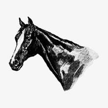 Vintage Horse Head Illustration