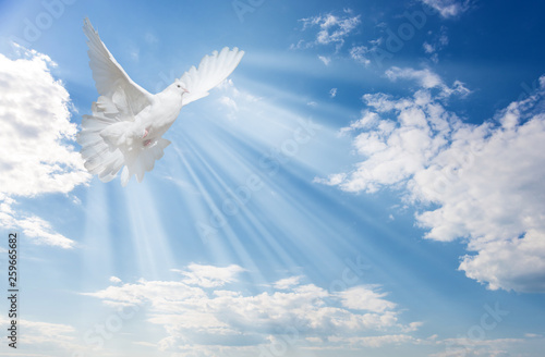 White dove against blue sky with white clouds