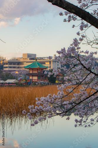 Fotobehang Zen 日本の春