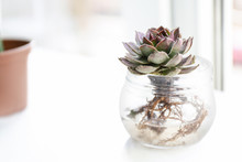 Succulent In Jar With Water On...