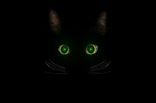 Black Cat Concept, Dark Mysterious Style. Glowing Green Cat Eyes In The Dark Night. Beautiful Animal Portrait. Domestic Pet Concept.