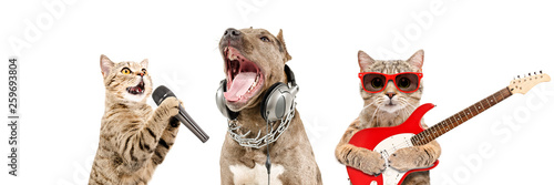 Portrait of pets musicians together isolated on white background - 259693804