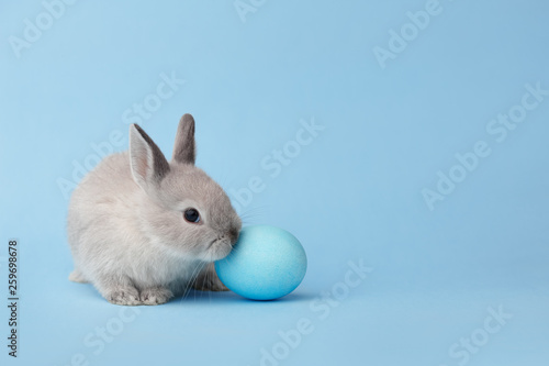 Photo  Easter bunny with egg on blue background