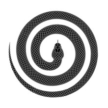 Vector Tattoo Design Of A Snake Curled Into A Spiral Shape With Head In The Center.