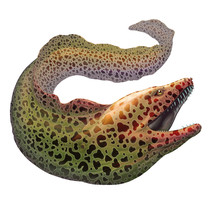Moray Eel Gymnothorax Moringa Realistic Illustration. Spotted Moray Eel Fish Illustration On White Background Isolated.