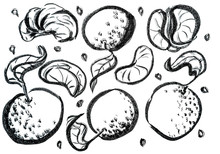 Sketch Fruits Drawn With Ink. Collection Of Hand Drawn Mandarins. Decorative Retro Style Collection Hand Drawn Farm Product For Restaurant Menu, Market Label. Healthy Food Poster. Linear Graphic.