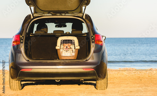 Fotografie, Obraz  Happy dog inside pet carrier in car trunk at sea beach