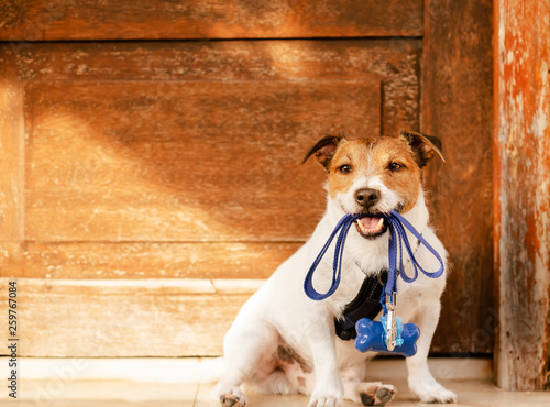 Photo  Dog holding leash in mouth sitting in front of door with poop bag dispenser atta