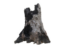 Stump Dead Tree In The White Background