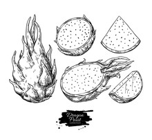Dragon Fruit Vector Drawing. H...