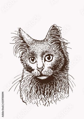 Photo sur Toile Croquis dessinés à la main des animaux Graphical vintage cat , vector illustration
