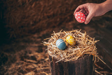 Hand Placed Easter Eggs On Wooden Stump