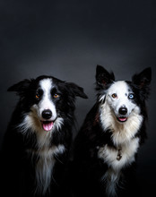 Purebred Dogs Sitting Near Each Other