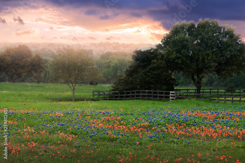 Poster Texas Field with bluebonnets and fence at sunset. Texas, United States